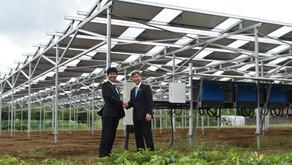 【導入事例】 千葉大木戸営農型太陽光発電所