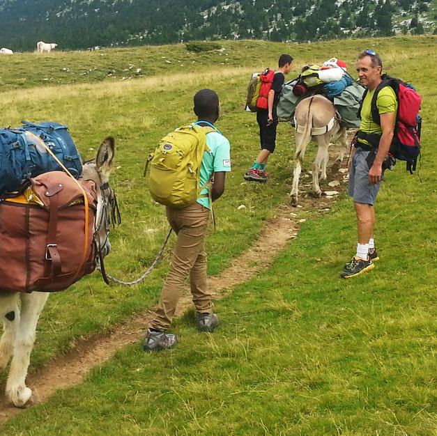 Sillonnant entre les troupeaux