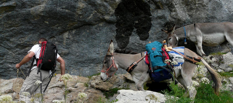 Séjour randonnée avec un âne