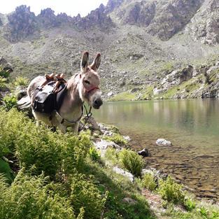 Grisou sherpa sur le tour des lacs de Belledonne