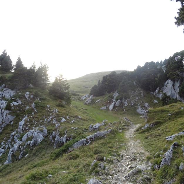 Les sentiers de la réserve de Chartreuse