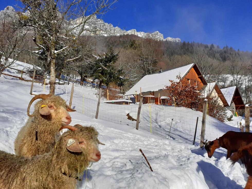 Gîte en montagne et animaux