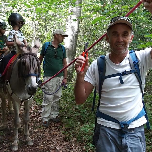 Randonnée à dos d'âne en forêt