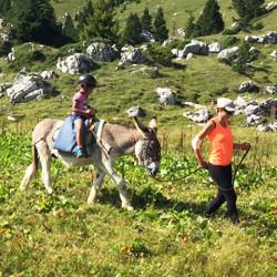 Balades ânes en montagne