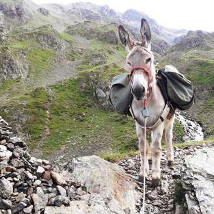 Notre sherpa en montagne