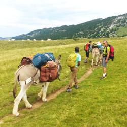 Randonnées avec les ânes