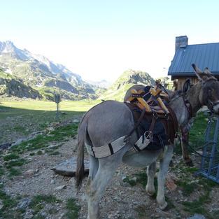 Les ânes au rendez-vous pour les randos