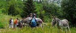Balades familles enfants avec un âne