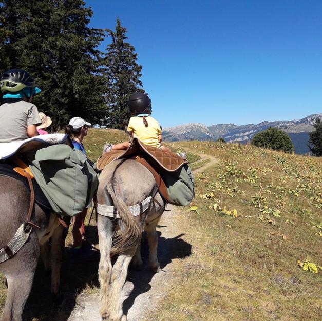 Un tour de Chamechaude en Chartreuse avec les ânes sherpas
