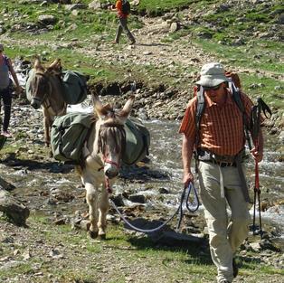 Caravane de randonneurs et d'ânes sherpas