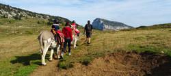 En Chartreuse avec un âne