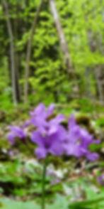 Eveil_forêt.jpg