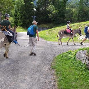 Randonnée itinérante en âne