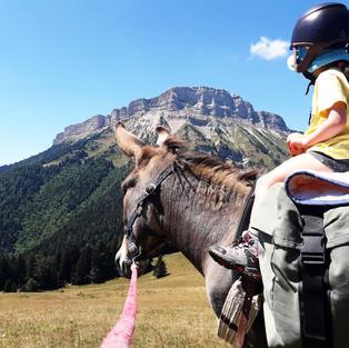 On admire le sommet de Chamechaude à dos d'âne