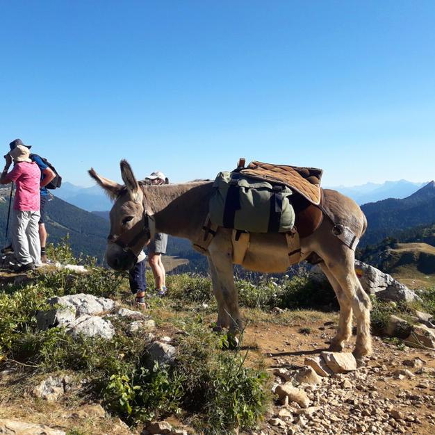 Observations des sommets de Chartreuse
