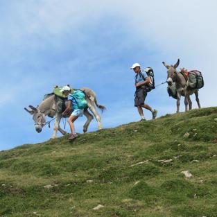 On mène les ânes !