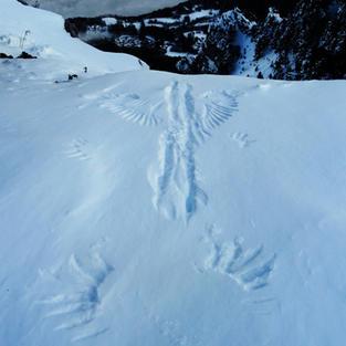 Observer les traces d'animaux sauvages