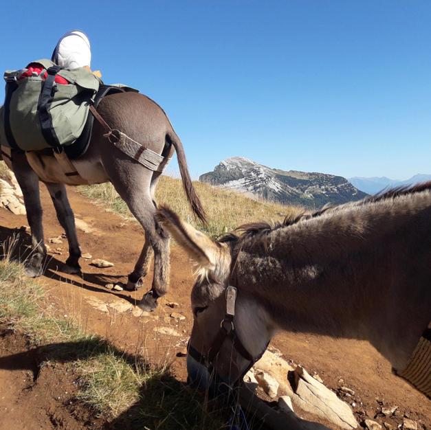 Accompagnés de fidèles sherpas
