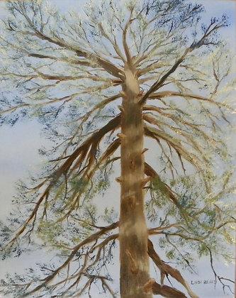 Sky Tree