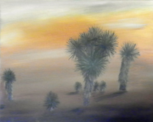 Yucca Garden at Sunset