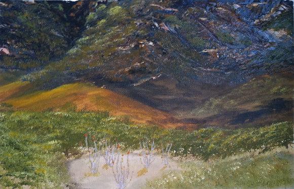 Ocotillo Spring