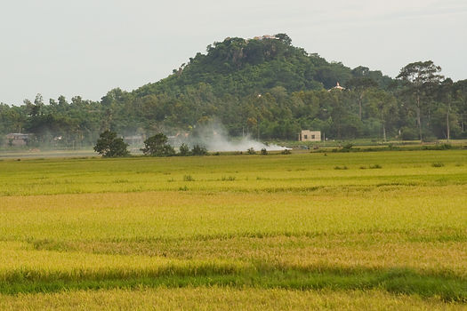 Gold Paddy Dinh Co.jpg