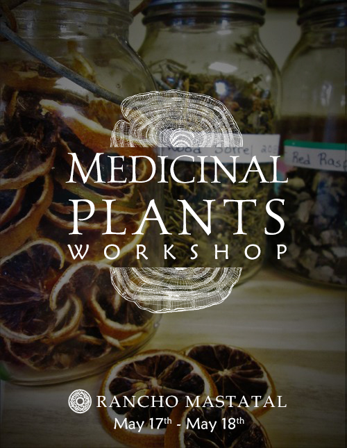 Medicinal Plants workshop
