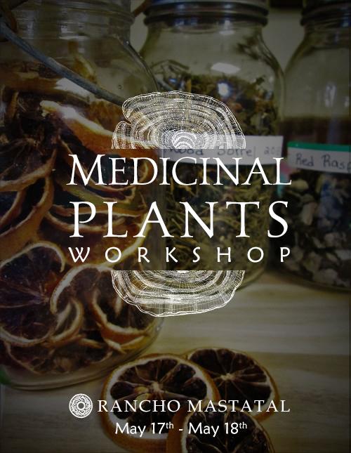 Medicinal Plants workshop