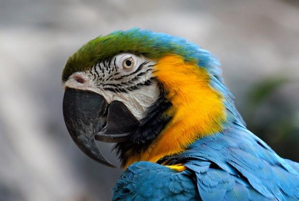 macaw-parrot-1497453467OFB.jpg