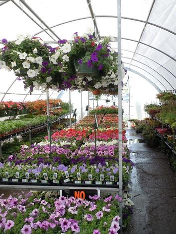 flowers-164814_1920.jpg