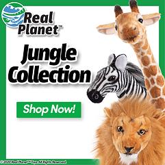 Jungle-Home-ALT2.png