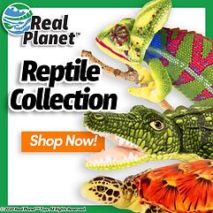Reptile-Home-ALT2.png