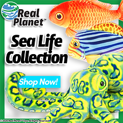 Sea-Home-ALT2.png