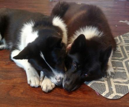 Shop dogs, Sirkka & Mara