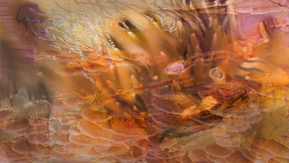 Коралова поляна