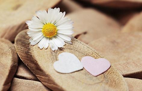 love daisy 2.jpg