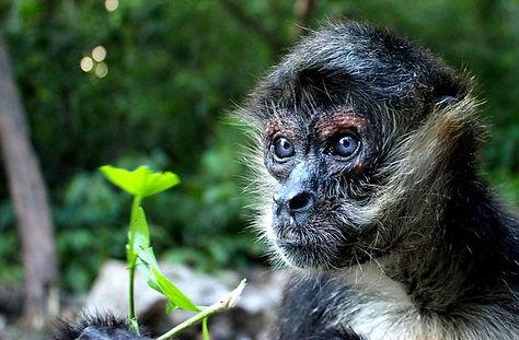 monkey sanctuary tulum.jpg