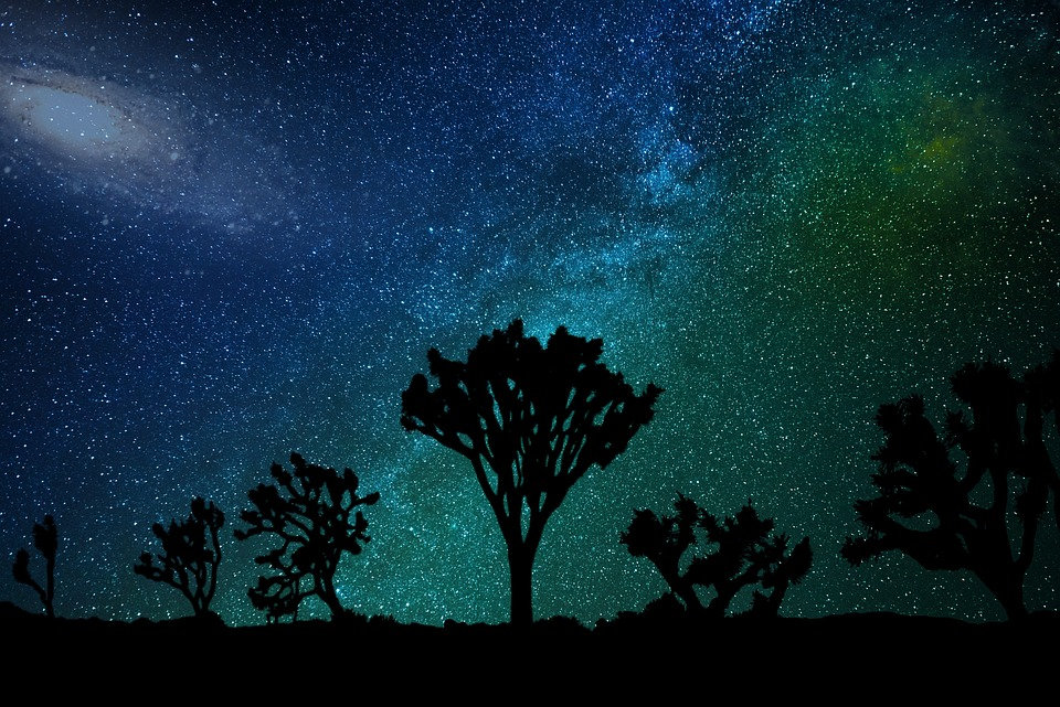 Joshua Tree Nights Sky