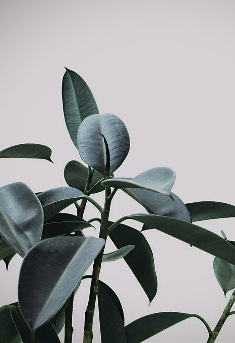 Plant_edited.jpg