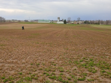 Check Alfalfa Stands This Spring and Make A Plan