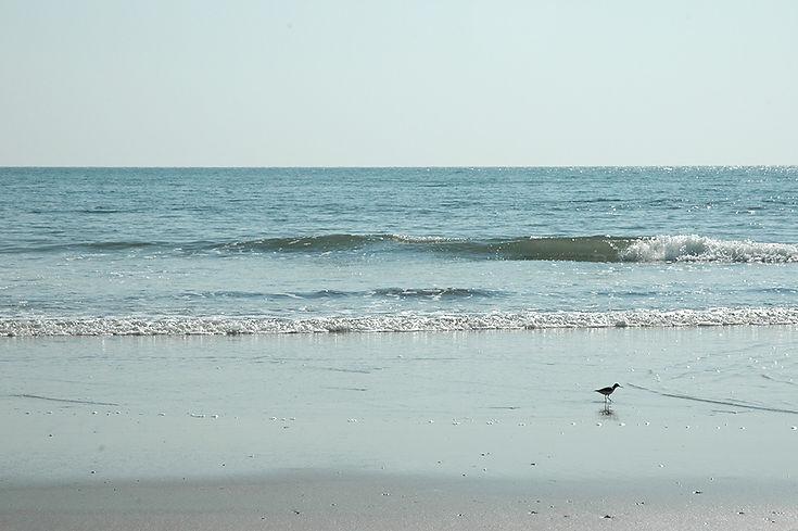 22  Bird on the seashore - Palolem beach, Goa   © Louis Divine 2017