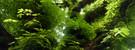 06_WS_1280x480_Chestnut_tree_Wallpaper_L