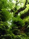 02_IPAD_768x1024-_Chestnut_tree_Wallpape