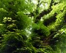 04_PCST_1280x1024-_Chestnut_tree_Wallpap