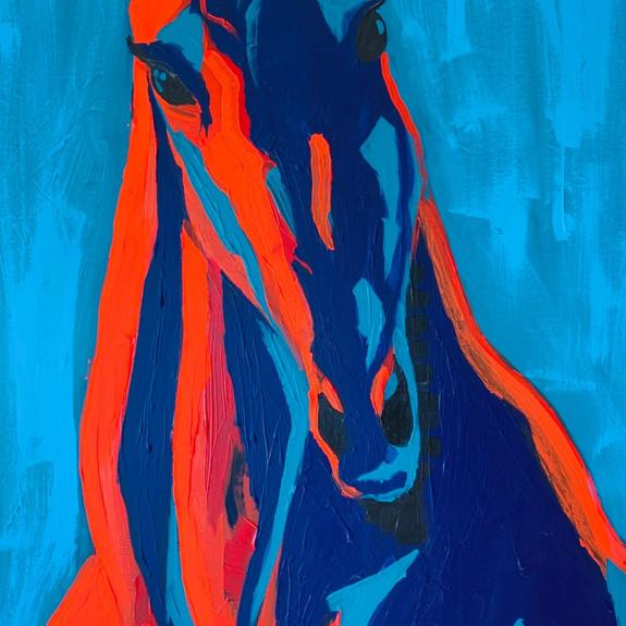 Maverick the Paint Pony, 2019
