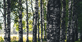 urjala_koivikko_joona_paija.jpg