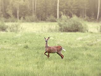 Honkola Hunting Oy
