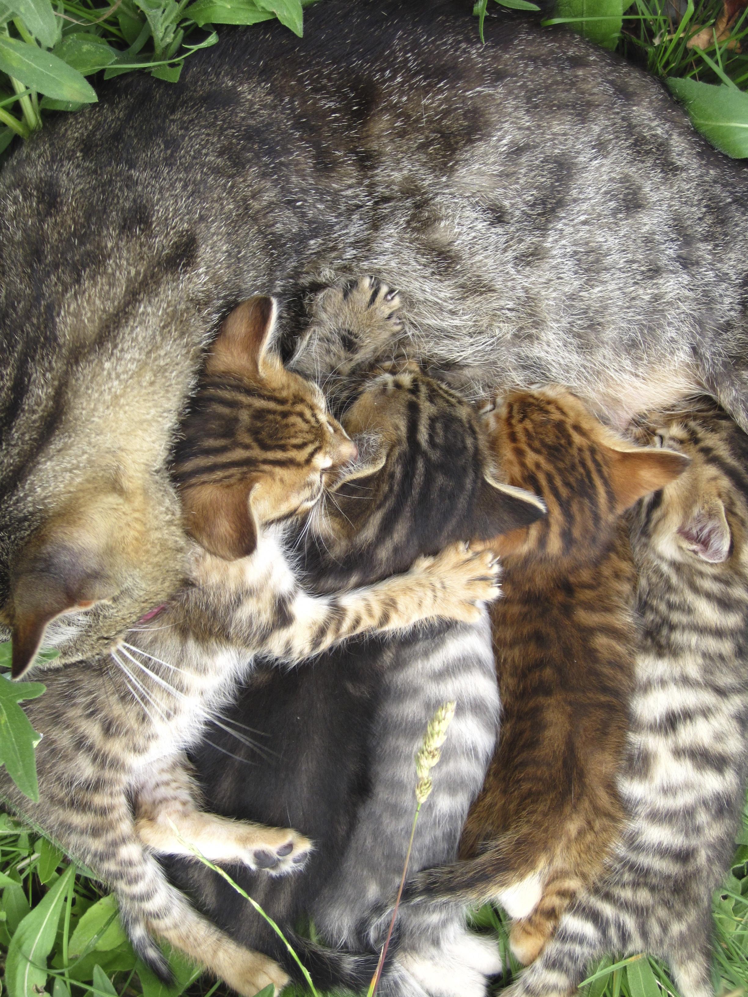 chatons à la ferme