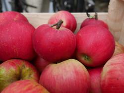 La récolte des pommes : Florina
