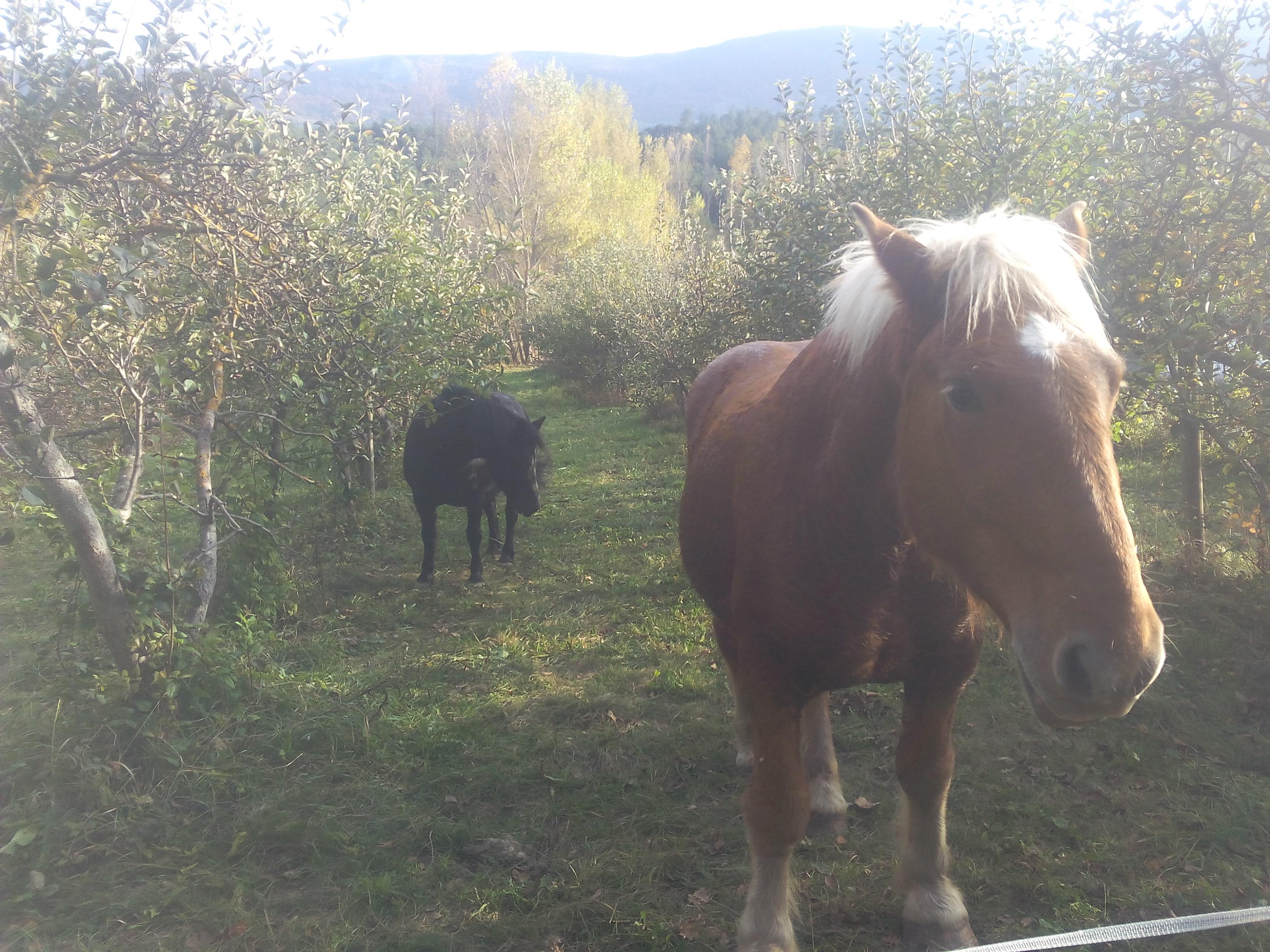 Premier jour d'Eliot à la ferme